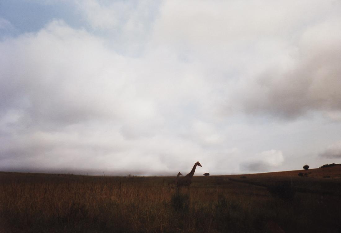 Marcus Bunyan. 'Photos My Mother Sent Me' 2005