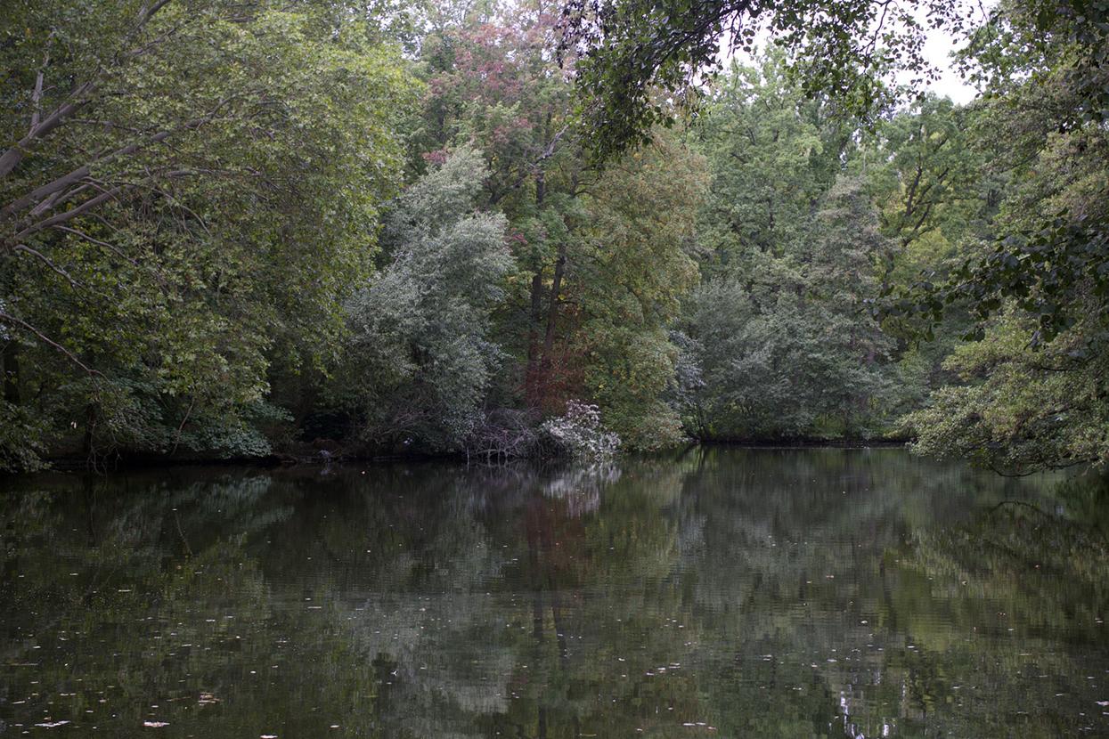 Marcus Bunyan. 'A Day in the Tiergarten' 2019-20