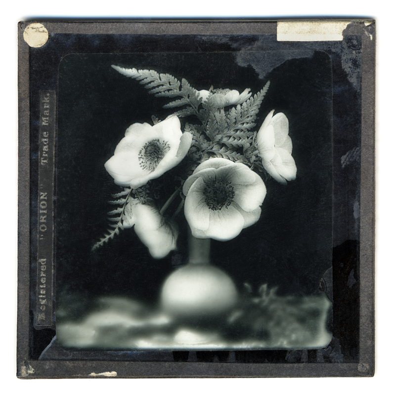 Marcus Bunyan. 'Anemone' 2004 from the series 'Neo_mort'