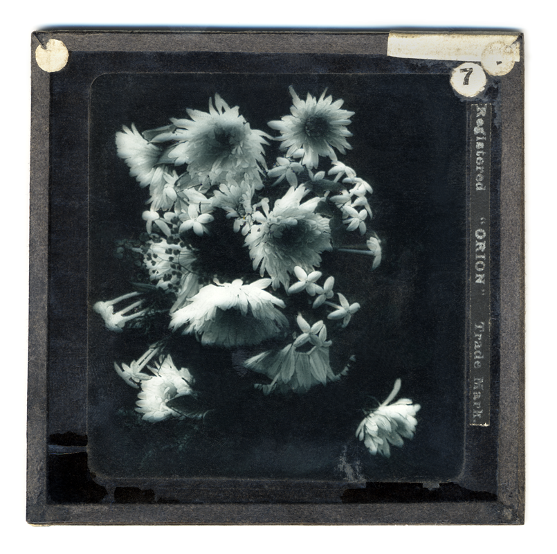 Marcus Bunyan. 'Chrysanthemum and Bovardis' 2004 from the series 'Neo_mort'